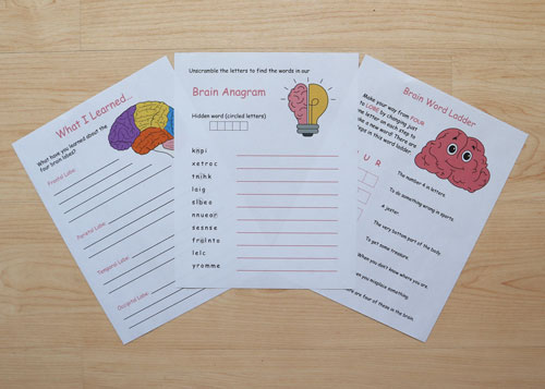 brain-themed worksheets